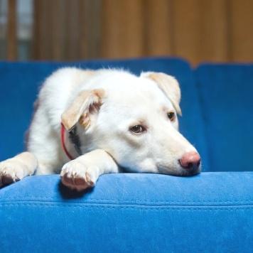 Филат - Собаки в добрые руки