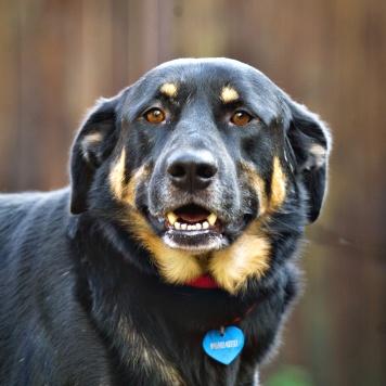 Лопух - Собаки в добрые руки