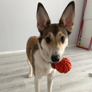 Лисенок - Найденные собаки