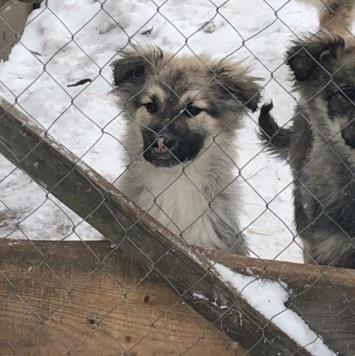 Щенки чебурашки - Собаки в добрые руки