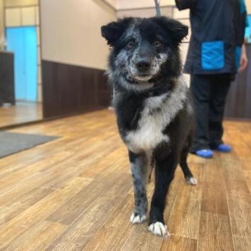 Шелдон - Собаки в добрые руки