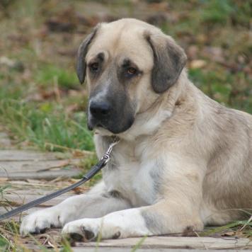 Назар - Собаки в добрые руки