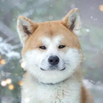 Коичи - Собаки в добрые руки