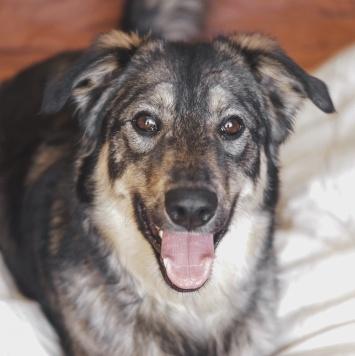 Смайли - Собаки в добрые руки