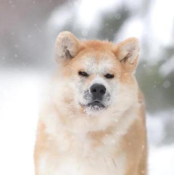 Аямэ - Собаки в добрые руки