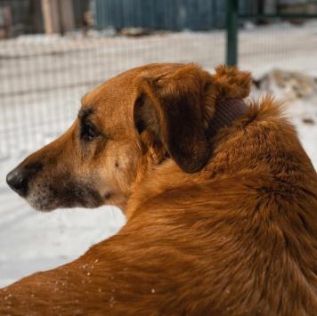Марта - Собаки в добрые руки