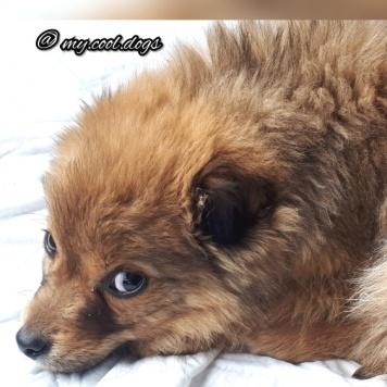 Мурзилки - Собаки в добрые руки