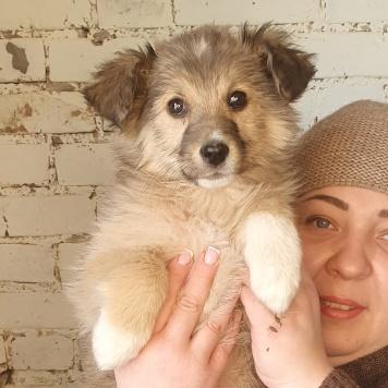 Фанни серая - Собаки в добрые руки