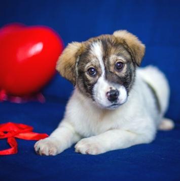 Туся - Собаки в добрые руки
