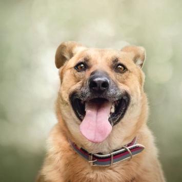 Фрейка - Собаки в добрые руки