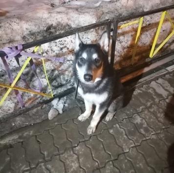 Пёс - Собаки в добрые руки