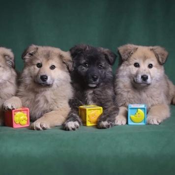 Смоленские щеночки - Собаки в добрые руки