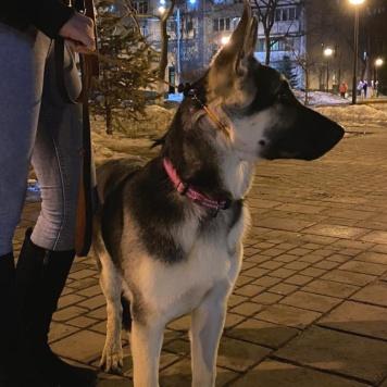 Несса - Собаки в добрые руки