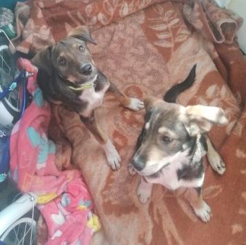 Даша и Маша - Собаки в добрые руки