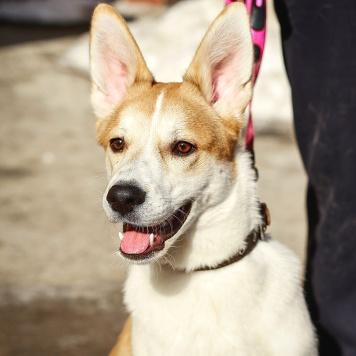 Матрос - Собаки в добрые руки