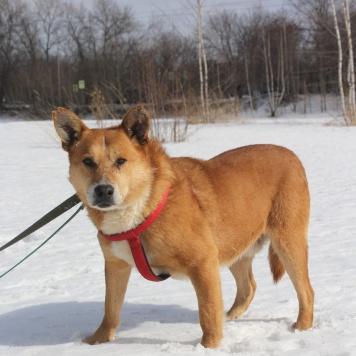 Ванечка-милейший пес - Собаки в добрые руки