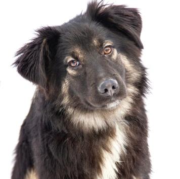 Гаспар - Собаки в добрые руки