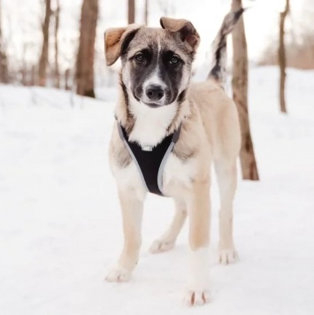 Эйприл - Собаки в добрые руки