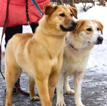 Дельфа и Дьюли - Собаки в добрые руки