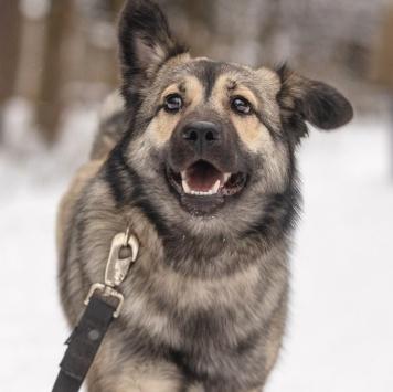 Герда - Собаки в добрые руки