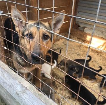 Щенки в приюте - Собаки в добрые руки