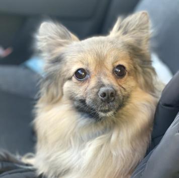 Примадонна - Собаки в добрые руки