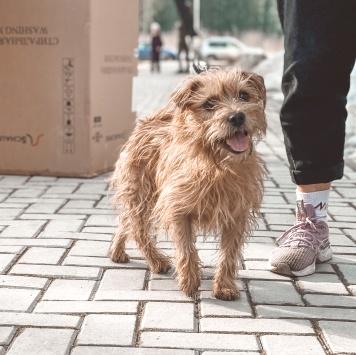 Граф - Собаки в добрые руки