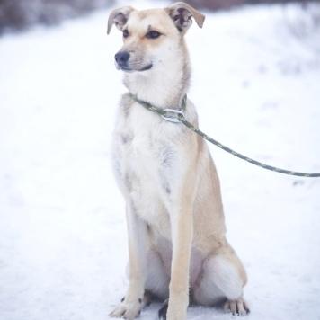 Апола - Собаки в добрые руки