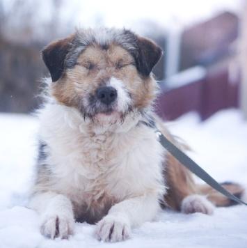 Вилма - Собаки в добрые руки