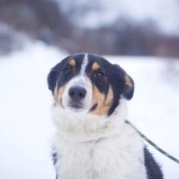 Нюта - Собаки в добрые руки