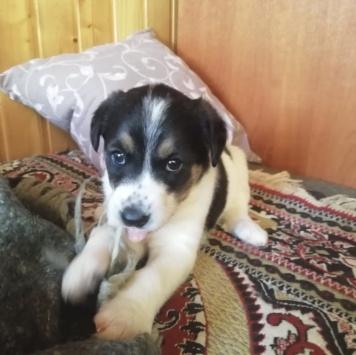 Даринка - Собаки в добрые руки