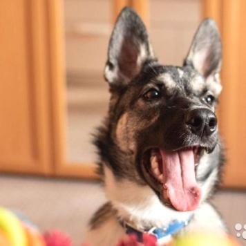 Фенрир - Собаки в добрые руки