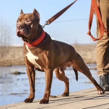 Патисон - Собаки в добрые руки