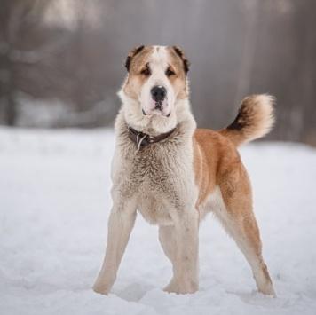 Викрам - Собаки в добрые руки
