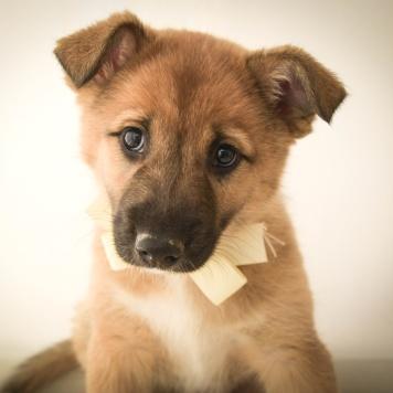 Самара - Собаки в добрые руки