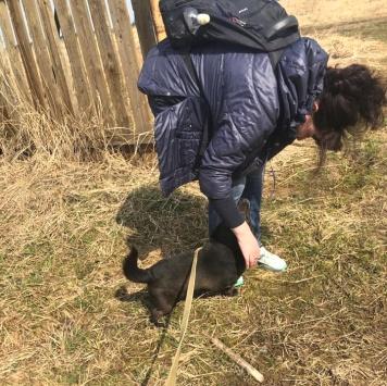 Чих-Пых - Собаки в добрые руки