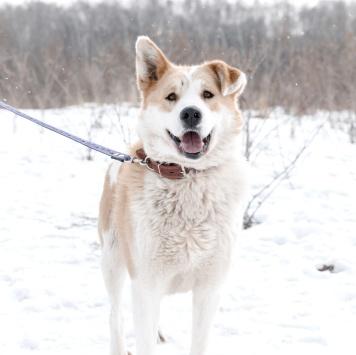 Борис - Собаки в добрые руки