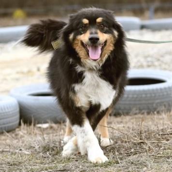 Зеня - Собаки в добрые руки