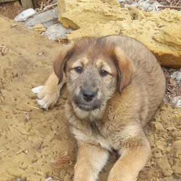 Четырех щенков - Собаки в добрые руки