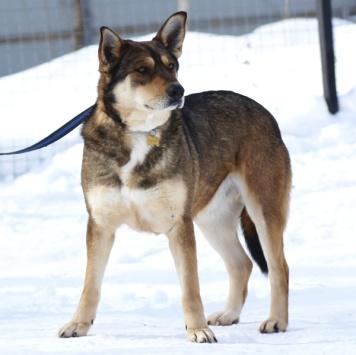 Филя - Собаки в добрые руки