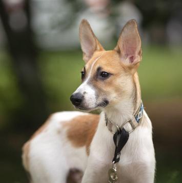 Дипер - Собаки в добрые руки