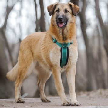 Малина - Собаки в добрые руки