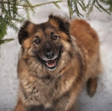 Харви - Собаки в добрые руки