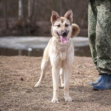 Альфа - Собаки в добрые руки