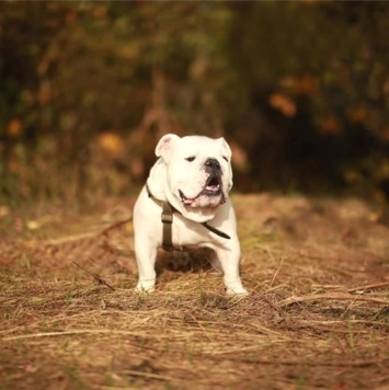 Барон - Собаки в добрые руки