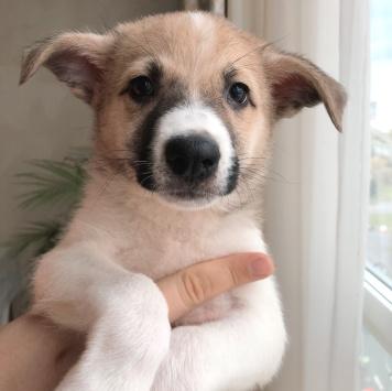 Элвин - Собаки в добрые руки