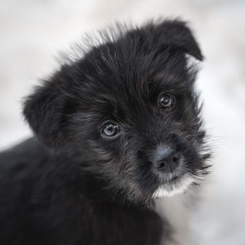 Петрушка и Чилли - Собаки в добрые руки