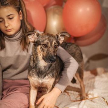Тэджи - Собаки в добрые руки