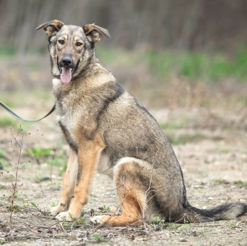 Нивея - Собаки в добрые руки