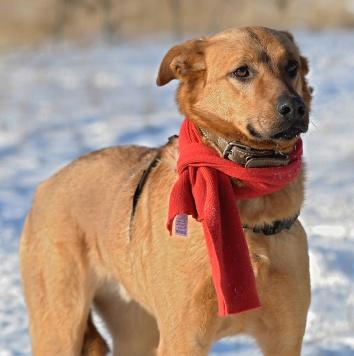 Киоки - Собаки в добрые руки